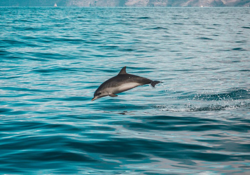 gray-dolphin-on-body-of-water-1986374